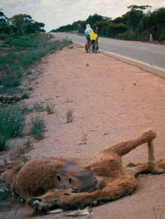 Roadkill Camel