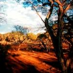 Bush camp Nullarbor