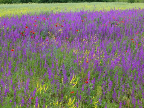 Field of flowers.