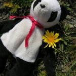 Panda and Dandelions