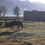 Tibetan pony