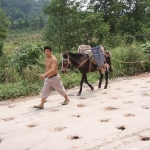 Tea Horse Route