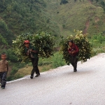 Chinese carrying plants