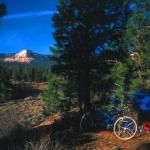 Utah bush camp