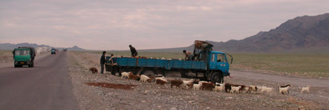 Tian Shan high pasture delivery.