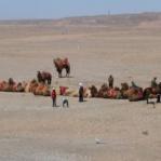 Camel train.