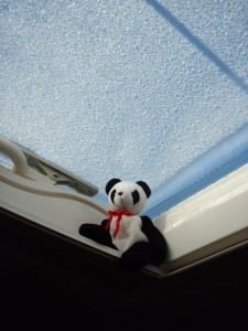 Lucky's Blog (A True Tale of One Panda's Adventures, In Serial Form)