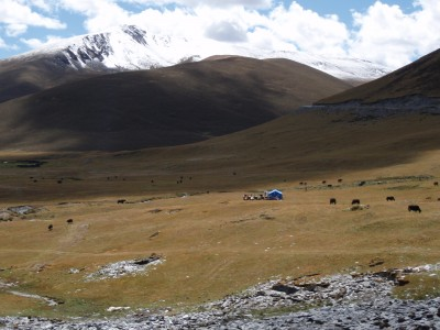 Tibetan Grazing Camp