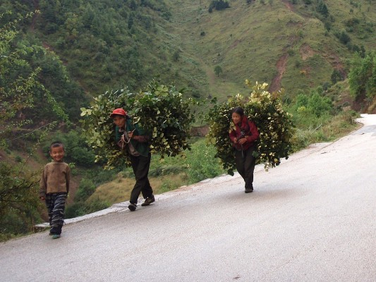 Chinese carrying burden of plants for animals