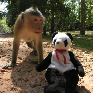 Lucky's Blog: Monkey Business