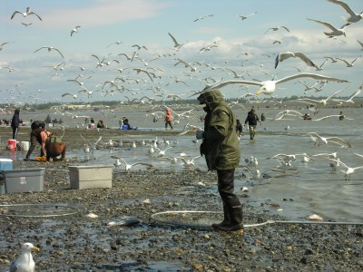 Alaska Fish Craziness in Kenai, Kenai River