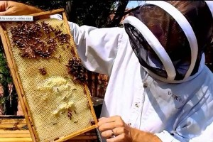 Urban Beekeeping in Tucson