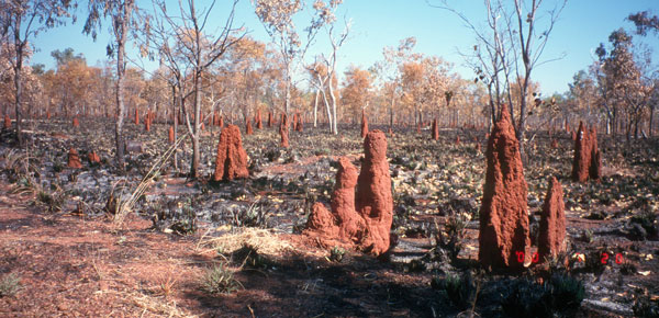 Bush Fire Aftermath