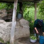 Drawing water, washing greens.