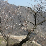 Springtime on the Great Wall.