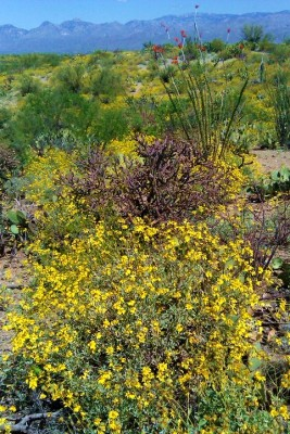 Spring Saguaro NP