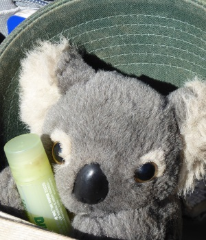Our traveling companion, Duncan who is returning to Australia with us after many years away. He holds Bob's lip balm and snuggles at night